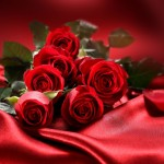 Cvety-Rozy-Valentine-Roses-Photo