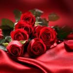 Cvety-Rozy-Valentine-Roses-Photo